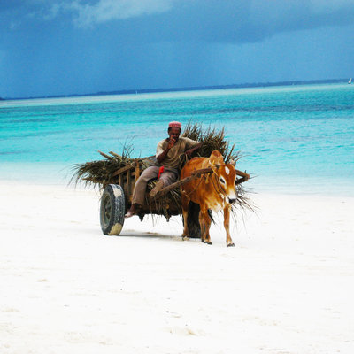 Stunning beaches of Zanzibar