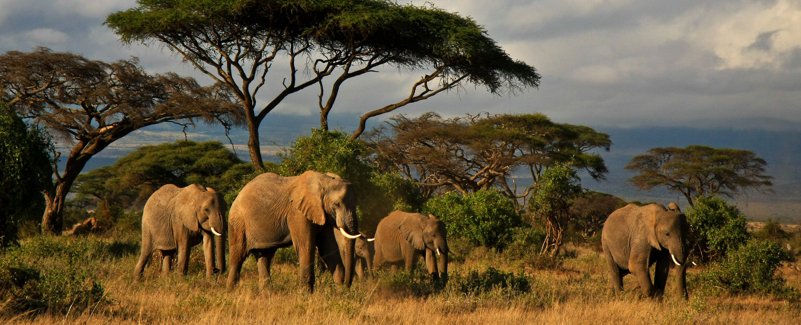 Elephants and Mt Kilimanjaro