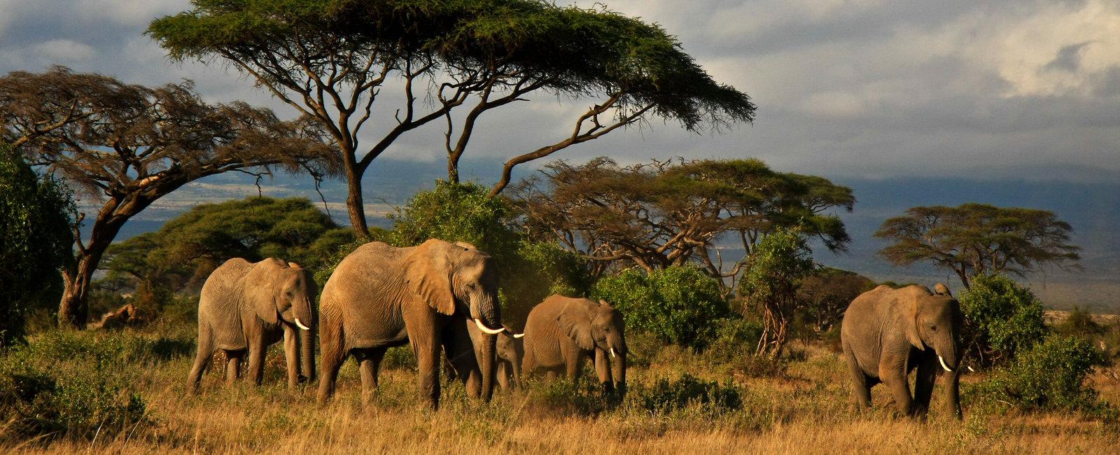 Elephants and Mt Kilimanjaro